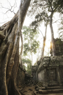 Cambodia, Angkor, Ta Prohm temple, Tomb Raider film location - REAF00193