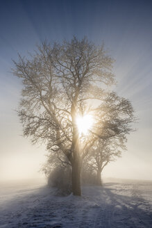 Germany, Baden-Wuerttemberg, Constance district, sun shining through tree in winter - ELF01833