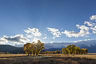 USA, Wyoming, Rocky Mountains, Grand Teton National Park, aspens in autumn - FOF08853