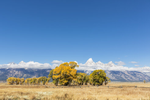 USA, Wyoming, Rocky Mountains, Grand Teton National Park, Cathedral Group and aspens in autumn - FOF08856