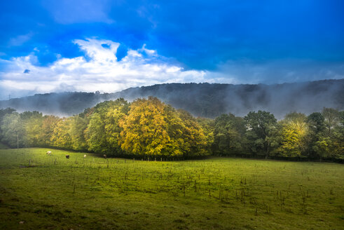 Cow pasture in autumn - SKAF00037