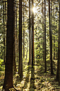 Czechia, Hradec Kralove, forest in Giant Mountains National Park - CSTF01247
