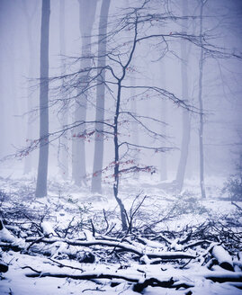 Trees in winter forest - SKAF00050