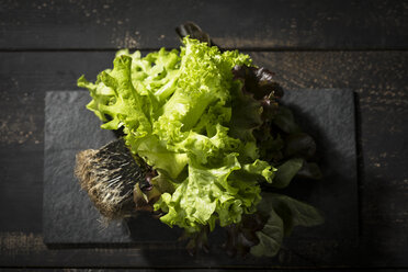Head of lettuce with roots - MAEF12153