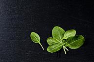 Leaf spinach on slate - CSF27880