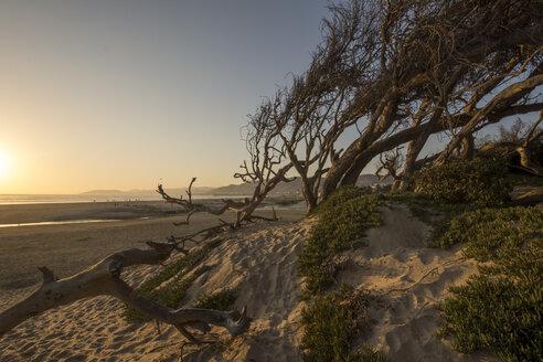 USA, California, Pismo Beach at sunset - LMF00690