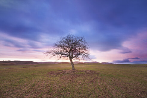 Spain, single bare tree in rural landscape at dusk - DHCF00064