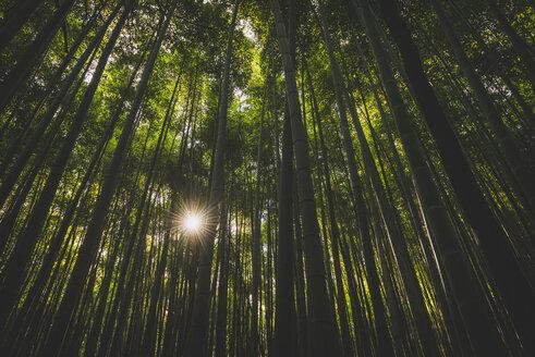 Japan, Kyoto, Arashiyama, bamboo forest - KEBF00504