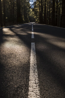 Spain, Tenerife, road through forest - SIPF01436