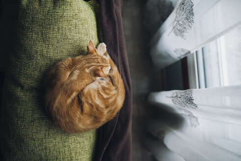 Cat sleeping on backrest of a couch - RAEF01765
