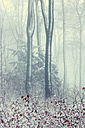 Germany, Wuppertal, forest in winter - DWIF00838