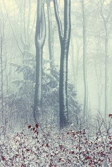 Germany, Wuppertal, forest in winter - DWIF00838