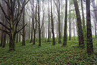 Portugal, Sintra, forest in spring - DSGF01530