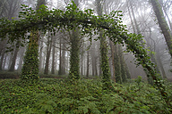 Portugal, Sintra, forest in spring - DSGF01533