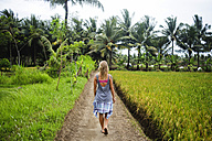Indonesia, Java, back view of woman walking on dirt track through rice fields - KNTF00656