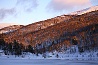 Norway, Telemark, Tinnsja lake and forest in winter - DSGF01544