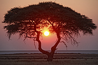 Namibia, Etosha National Park, sunset - DSGF01578