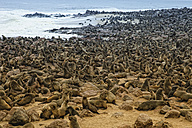 Namibia, Swakopmund, Namib desert, colony of Cape Fur Seal by the sea - DSGF01584