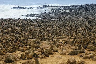 Namibia, Swakopmund, Namib desert, colony of Cape Fur Seal by the sea - DSGF01584