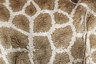 Skin of a giraffe - DSGF01593