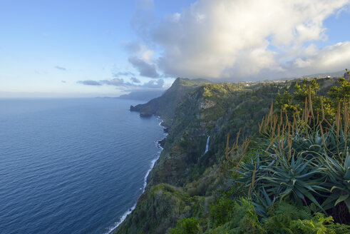Portugal, Madeira, cliffs at Santana, north coast - RJF00677