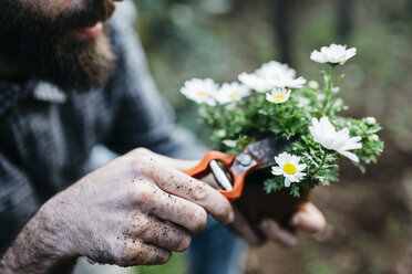 Man pruning flower in his garden - JRFF01265