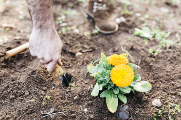 Man planting flowers in his garden - JRFF01271