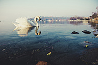 Italy, lake and swan - SIPF01453