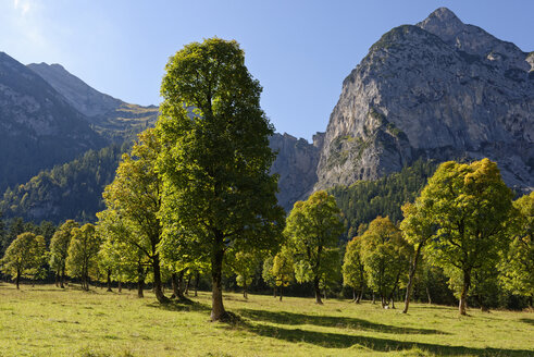 Austria, Tyrol, trees in front of Karwendel Mountains in autumn - LBF01593