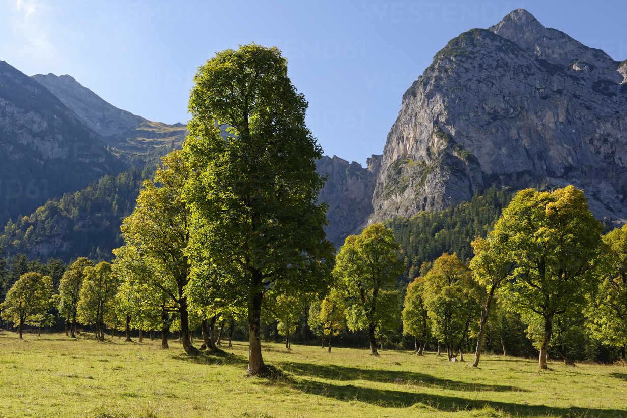 Austria, Tyrol, trees in front of Karwendel Mountains in autumn - LBF01593 - Lisa und Wilfried Bahnmüller/Westend61