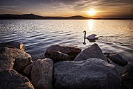 Italy, Lago Viverone at sunset - SIPF01474