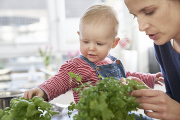 Mother and baby girl examining herbs in kitchen - FMKF03642
