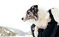 Dog in the arms of its owner - MGOF03083