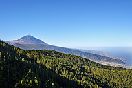 Spain, Tenerife, Teide National Park, Orotava Valley and Pico del Teide, Esperanza forest - SIEF07358
