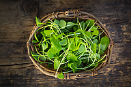 Wickerbasket of organic winter purslane on dark wood - LVF05964