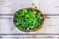 Wickerbasket of organic winter purslane on wood - LVF05967