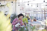 Woman watering her rooftop garden - WESTF22828