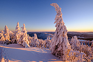 Germany, Bavaria, Bavarian Forest in winter, Great Arber, Arbermandl, snow-capped spruces in the evening - SIEF07374