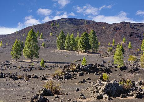 Spain, Canary islands, Tenerife, Montana Negra oder Volcan Garachico near El Tanque - SIEF07383