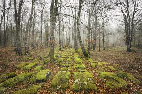 Spain, Burgos, moss-grown rock pathway in autumn forest - DHCF00070
