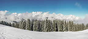 Austria,Vorarlberg, Kleinwalsertal, high route in winter - WGF01072