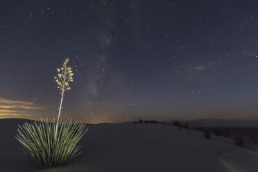 USA, New Mexico, Chihuahua Desert, White Sands National Monument, soap tree at night - FOF09216