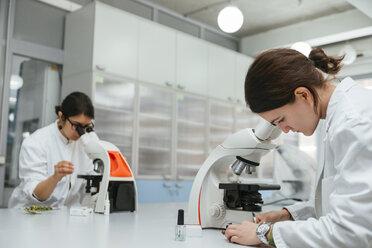 Laboratory technicians using microscopes in lab - ZEDF00563