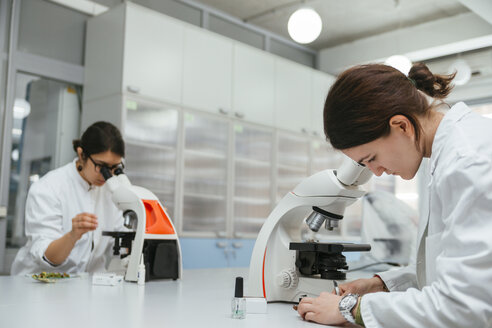 Laboratory technicians using microscopes in lab - ZEDF00563
