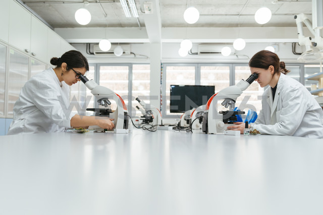 Laboratory technicians using microscopes in lab - ZEDF00566