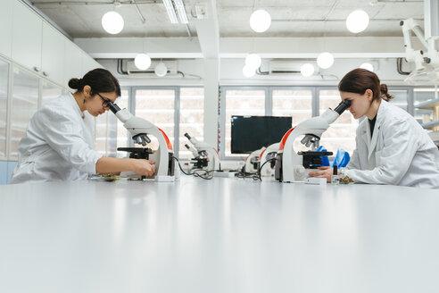 Laboratory technicians using microscopes in lab - ZEDF00566