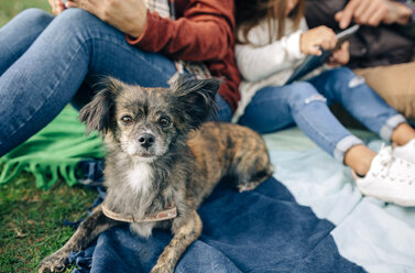 Small dog looking at camera next to family sitting on blanket outdoors - DAPF00706