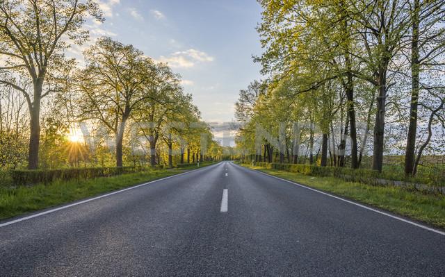 Empty treelined street at sunset - PVCF01078