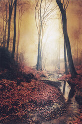 Sunrise in autumn forest with brook - DWIF00846