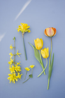 Forsythia, daffodil and tulips - GISF00279